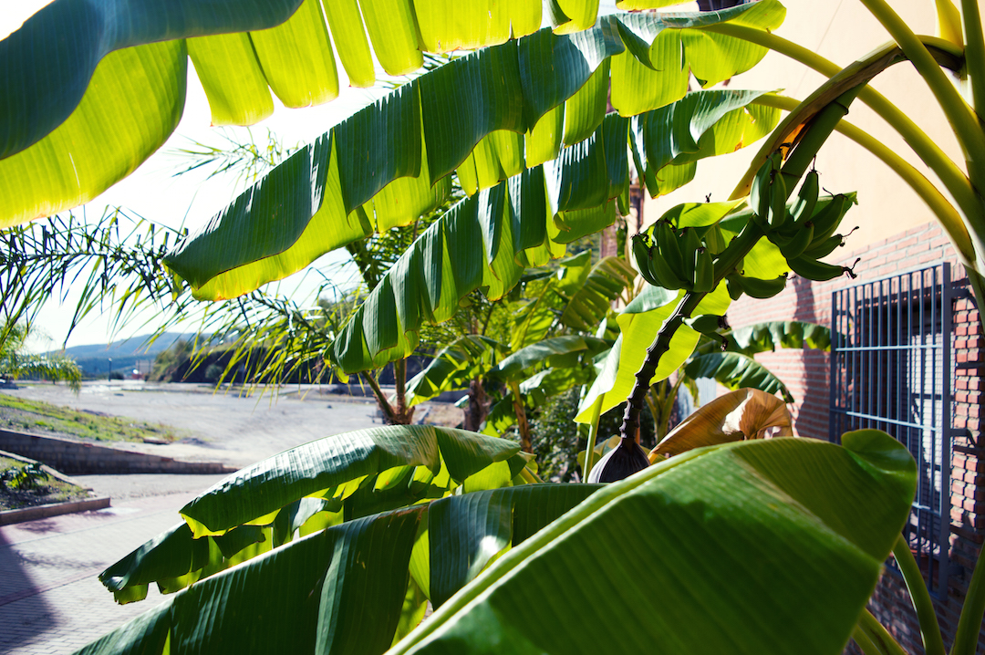 Spain-holiday-andalusia-banana-leaf