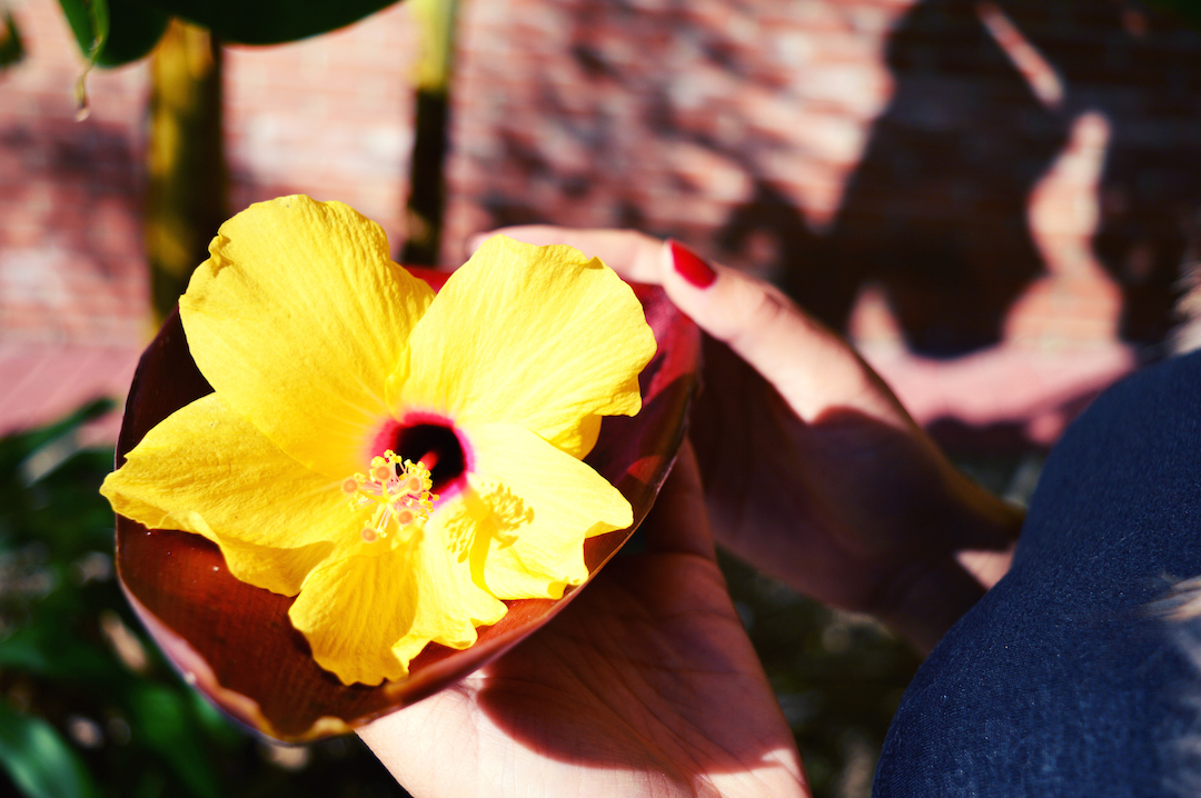 Spain-holiday-flower-hibiscus
